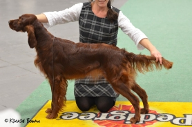 Tilly winning the Nordic Junior winner title at Stockholm 2015, judge: Mr J Thirlwell, UK