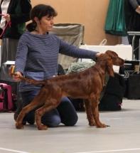 First puppy show
