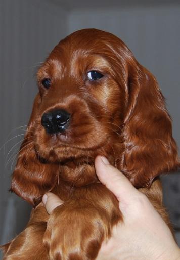 "Winsford Chantilly Cream ""Tilly"""