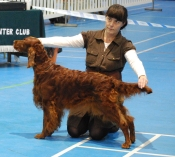 Setter and Pointer 2012
