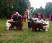 ISF Herrfallet 2015 Tosca BOS with son Copper's Magiska Under BIS, judge: Kasia Czapla, Poland