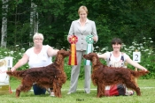 ISF Eksjö 2013 Tosca BOS and her son Copper's Magical Mysteri Tour BOB, Judge: Teresa Gisby, UK
