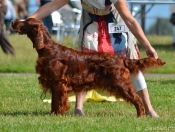 Tosca winning her 3rd CC at Paignton 2013, judge: Mrs Gaye O'Connor, UK