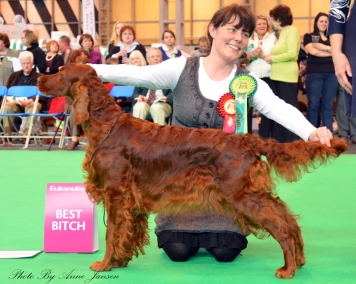 Bitch CC at Crufts 2012, judge: Eva Ciechonska, UK