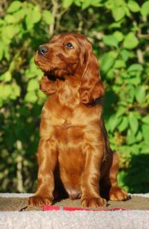 red boy 6,5 weeks