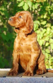 Yellow boy 6,5 weeks