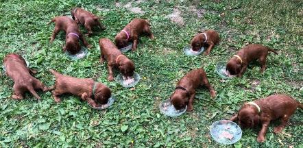 Första gången de åt ur egna skålar
