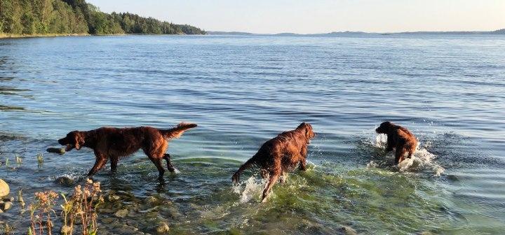 Hundarna-badar