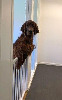 Återigen Paddy som spanar längs korridoren