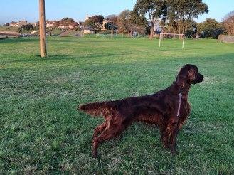 Paddy spanar in en lekande hund