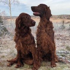 Pippi och Paddy Januari 2020